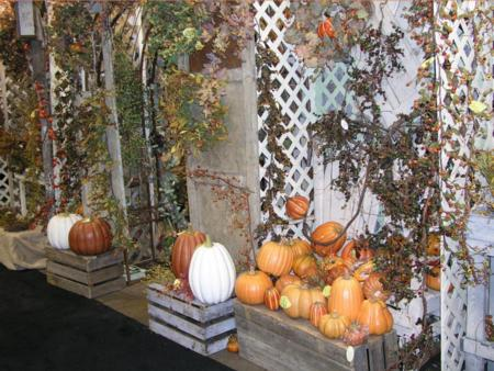 2005 Transworld Halloween Section -  - Picture