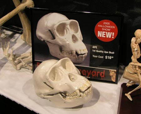 2005 Transworld  Products - Anatomical Chart Company - Ape Skull - Picture