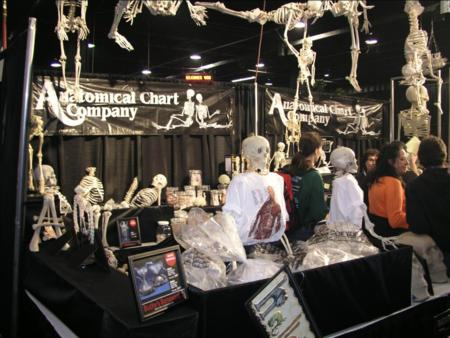 Transworld Haunter Section - Anatomical Chart Company - Picture