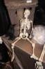 Buckys Boneyard