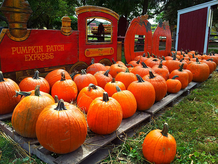 The Pumpkin Patch in Caledonia, IL